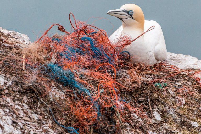 Tackling Ocean Plastic   Part 2